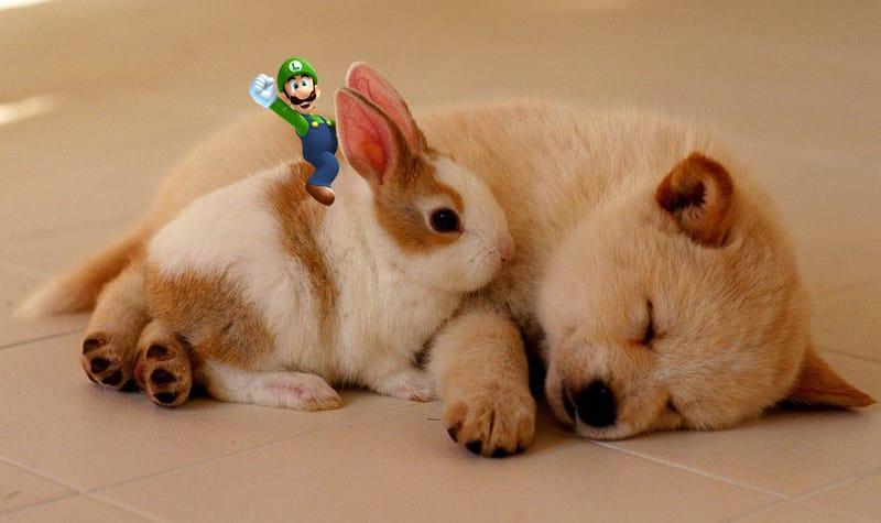 Illustration for article titled Lazy Sunday Review: Super Luigi U