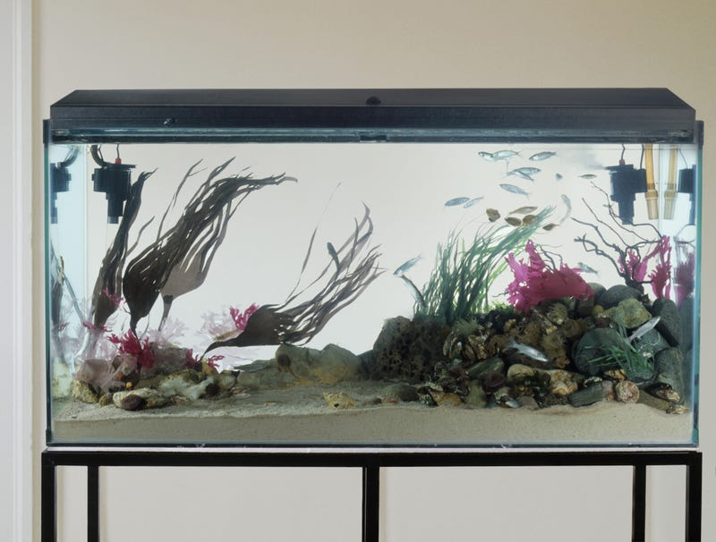 Illustration for article titled Right Side Of Fish Tank Where All The Action At
