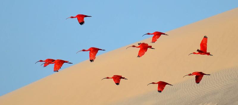 Illustration for article titled Estas son las mejores fotografías de naturaleza de 2015