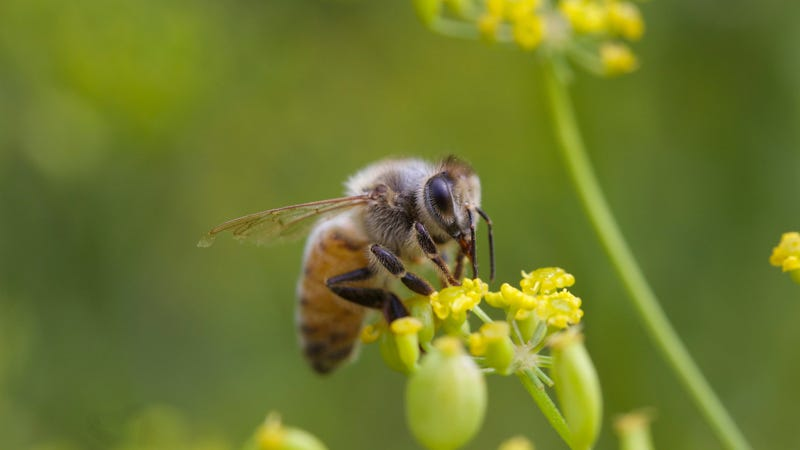 Neonicotinoid pesticides found in 75 percent of honey worldwide