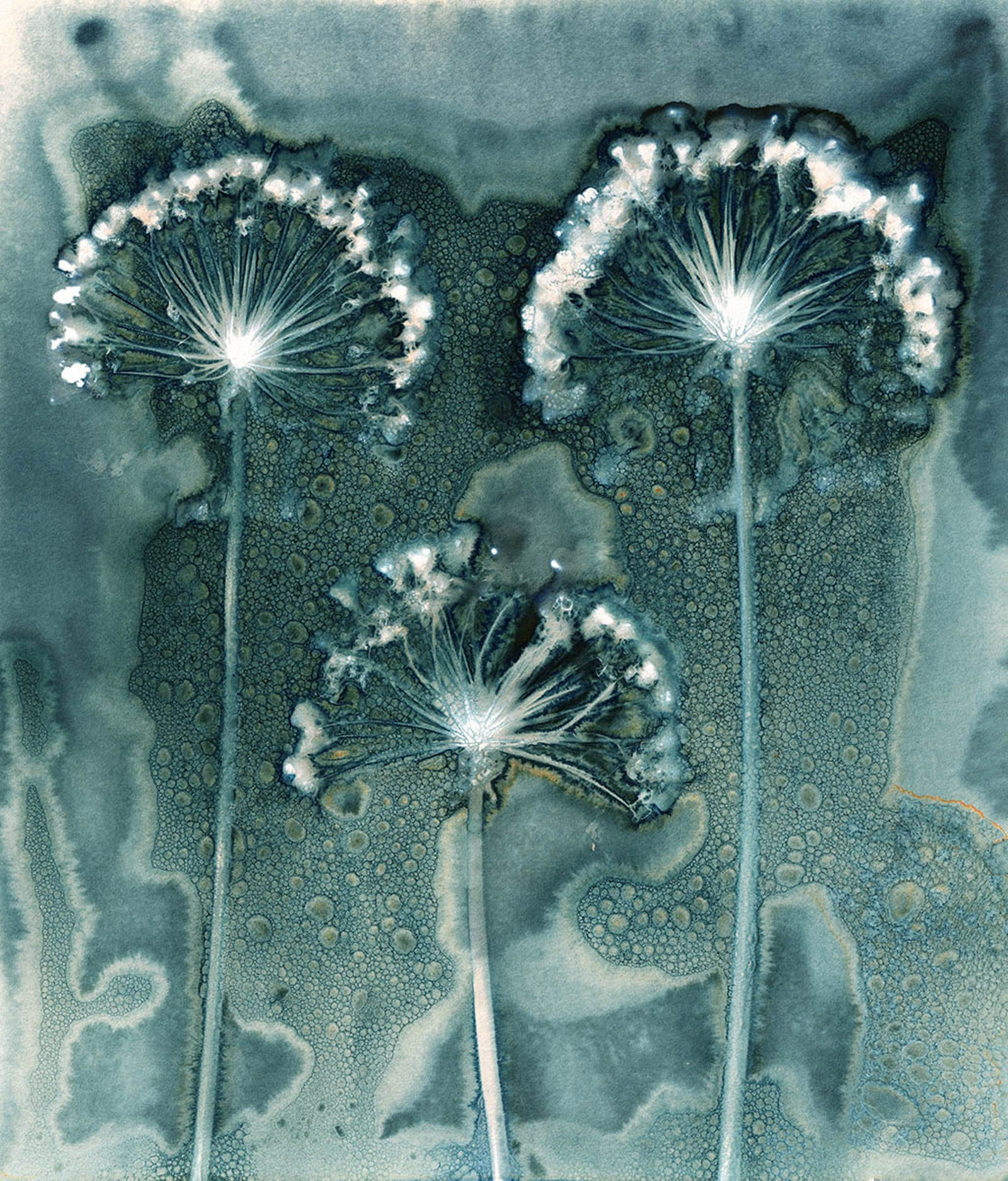 These Award-Winning Botanical Photos Belong in Alice in Wonderland
