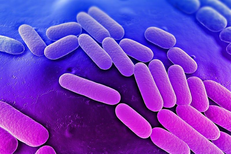 Muere en Estados Unidos una mujer por una bacteria resistente a antibióticos