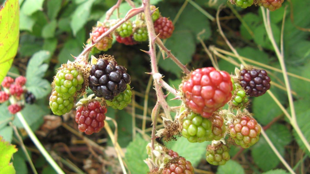 7 Plants To Scare Off Burglars, Nosy Neighbors, and Everyone