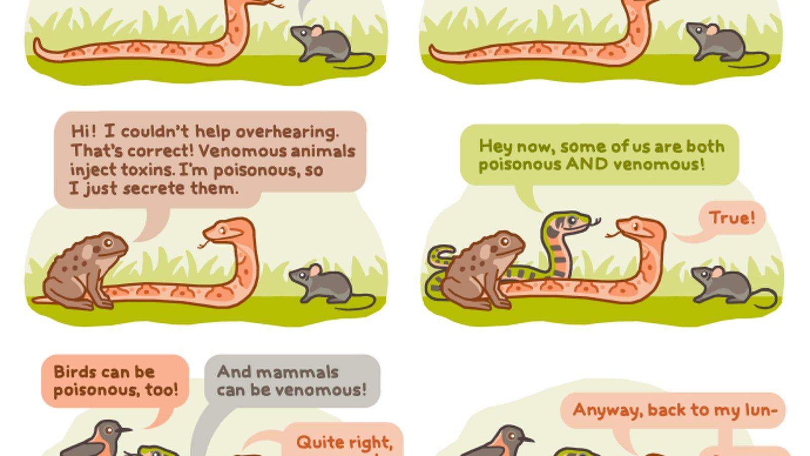 venomous vs poisonous explained with adorable talking animals