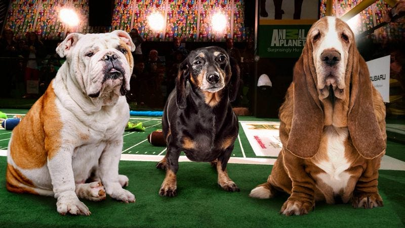 Illustration for article titled Surviving Members Of First Championship Team Honored During Puppy Bowl Halftime