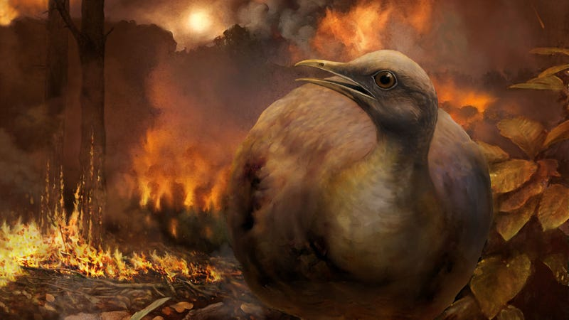 Illustration for article titled Dinosaur-Killing Asteroid Rewrote the History of Birds