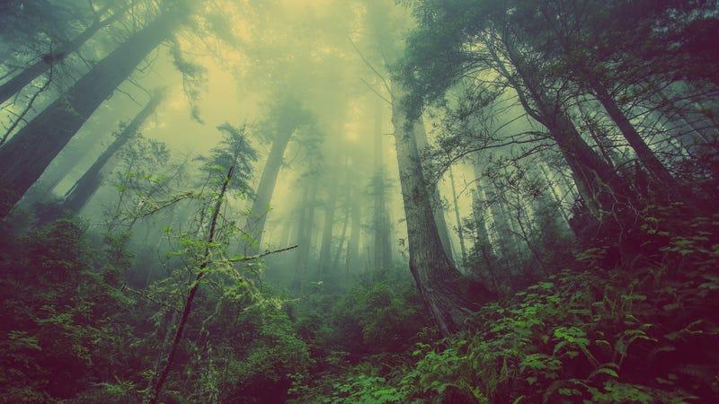 Illustration for article titled Este vídeo del suelo respirando en un bosque de Canadá se ha hecho viral y no es para menos, porque es aterrador