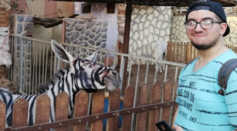 Illustration for article titled Egyptian Zoo Ridiculed for Allegedly Disguising Donkey as Zebra