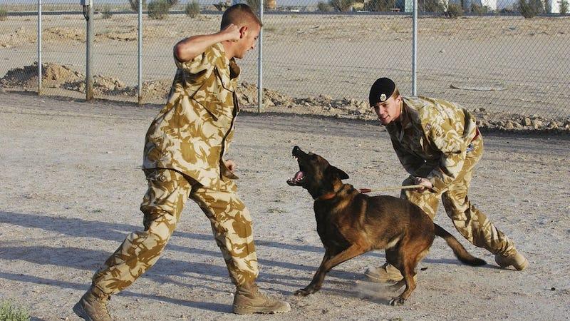Old War Dog Breeds