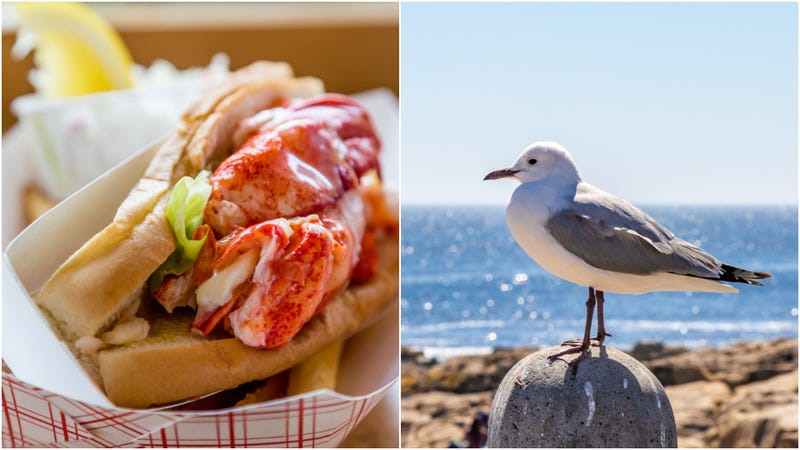 Illustration for article titled Asshole seagull snatches $21.50 lobster roll
