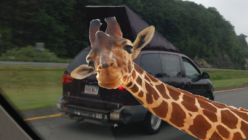 Illustration for article titled Comment Of The Day: I Have A Permit For That Giraffe Edition