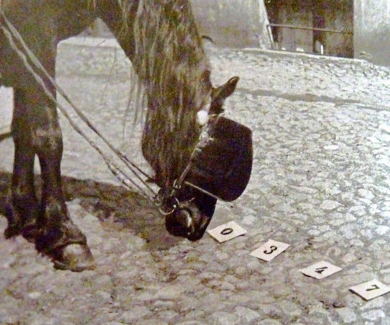 clever Hans: el caballo matemático que desafió a científicos
