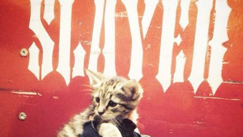 Illustration for article titled Slayer tour manager rescues homeless kitten