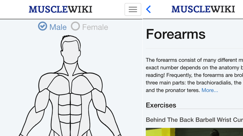 Illustration for article titled The MuscleWiki App Puts a User-Friendly Exercise Database on Your Phone