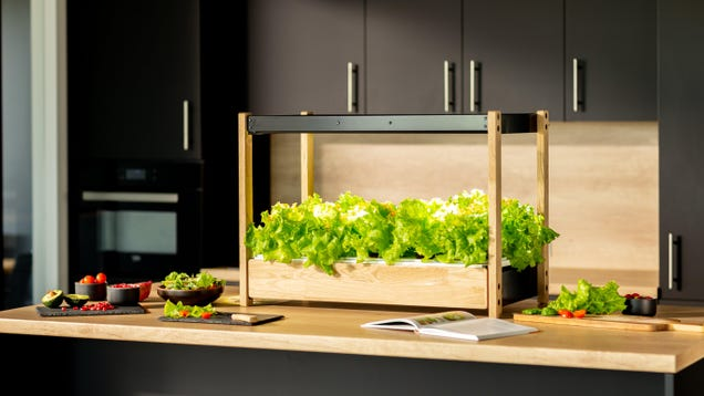 This Indoor Garden Will Feed You Greens Year-Round