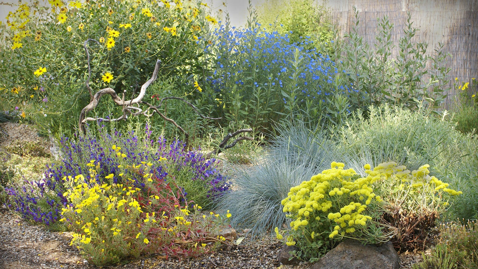 Replace Your Lawn With These Superior Alternatives