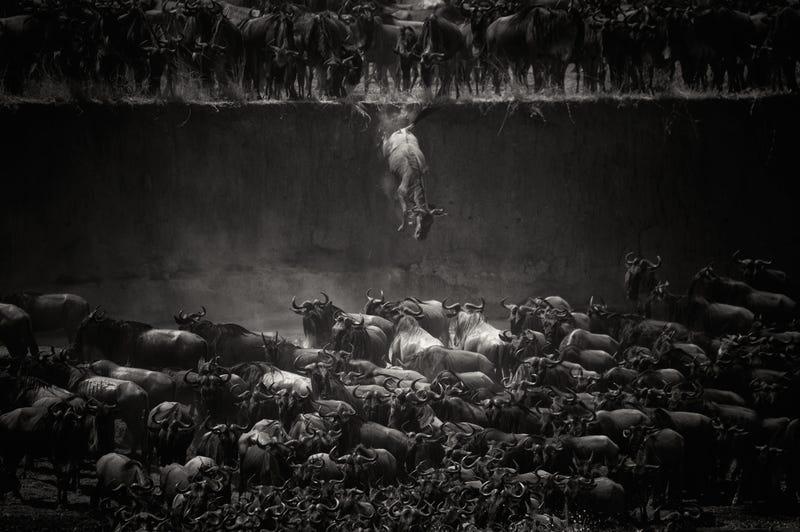 Illustration for article titled Las impresionantes fotos ganadoras del concurso de National Geographic