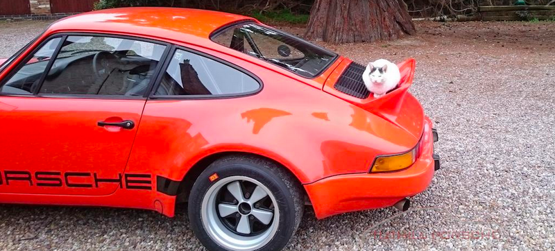 Illustration for article titled Here's A Cat Resting On A Restomod Porsche