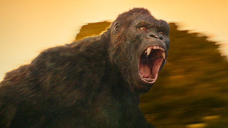 Illustration for article titled BREAKING: King Kong Continues to Be a Giant Gorilla