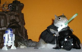 Illustration for article titled Sick of MacBook Posts? Here's a Picture of a Squirrel Dressed Up Like Darth Vader