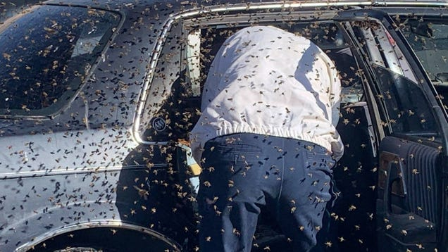 New Mexico Man Starts Driving Home From Albertson s Before Noticing Beees, Thousands of Beees!