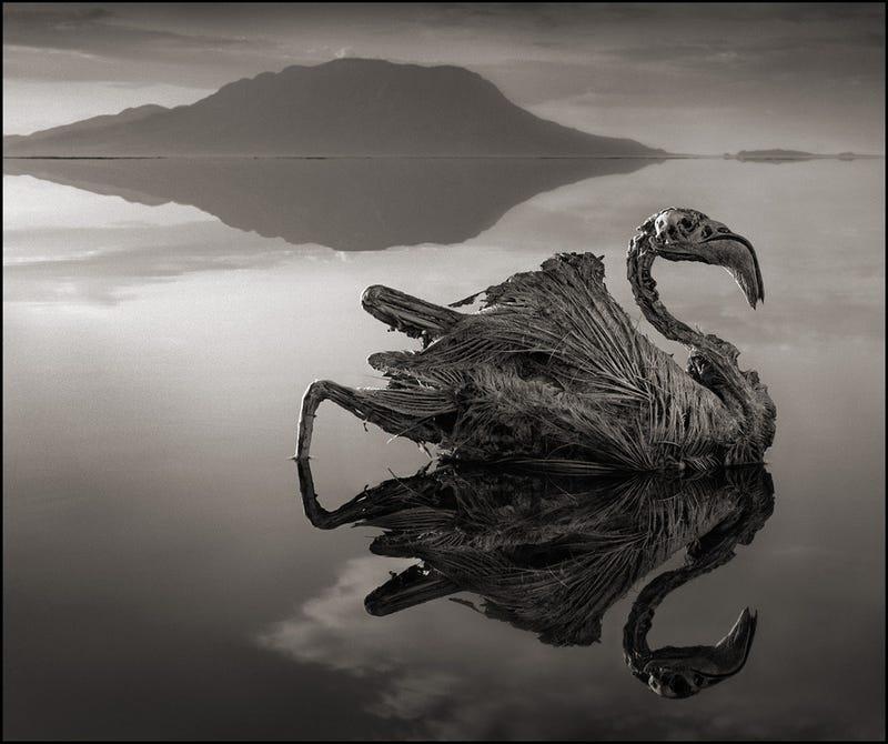 Natrón, el espeluznante lago africano que petrifica a sus víctimas