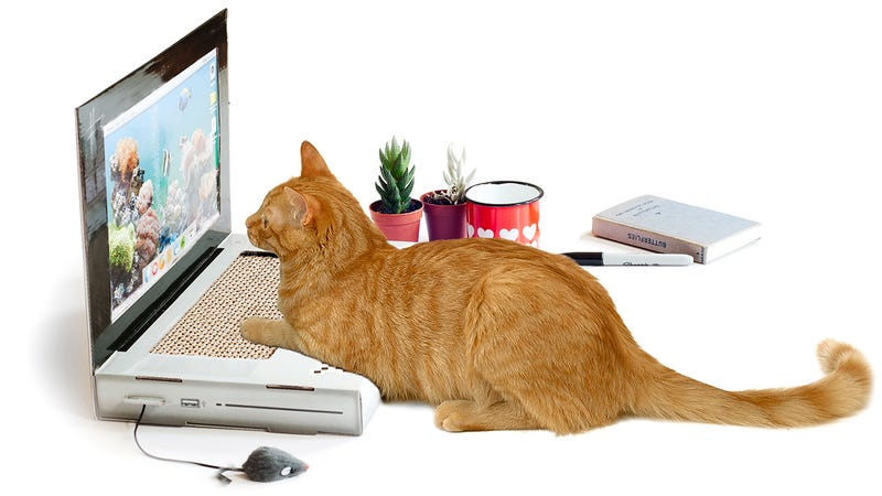 Illustration for article titled A Laptop Scratching Post Lets Your Cat Create Its Own Viral Content