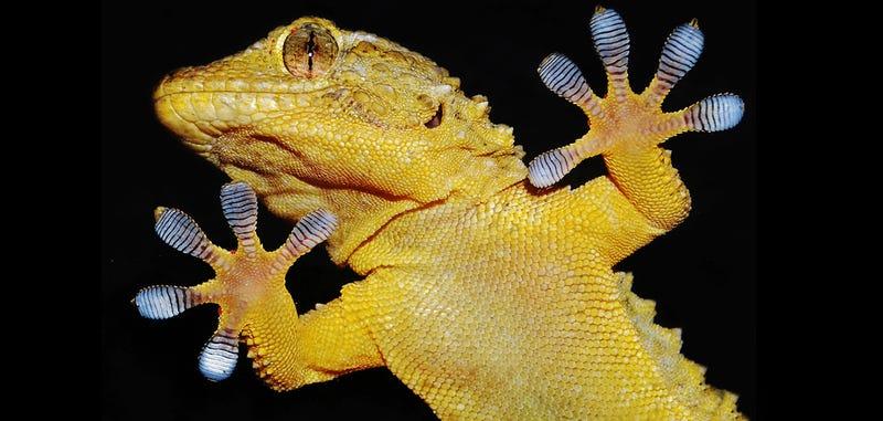 Illustration for article titled DARPA diseña un tejido para guantes que permite escalar paredes lisas