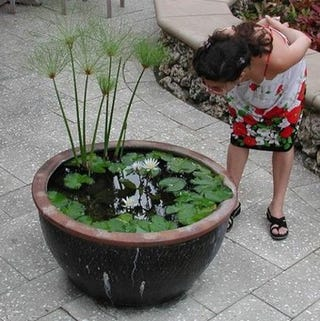 Build a container water garden to cure your pond cravings for Balcony koi pond