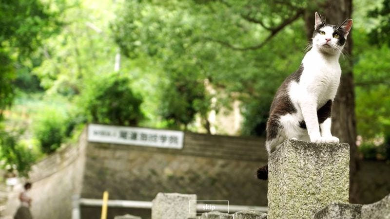Illustration for article titled Japan has a Google Street View for cats