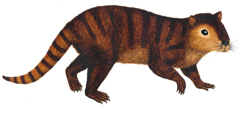 Illustration for article titled The 'Prehistoric Beaver' That Helped Mammals Inherit Earth