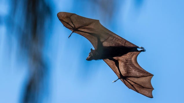 If a Bat Was in Your Bedroom, You Probably Need a Rabies Shot