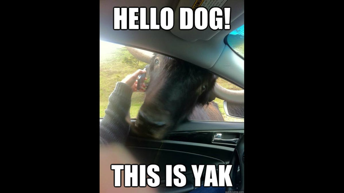 Hello Dog This Is Yak