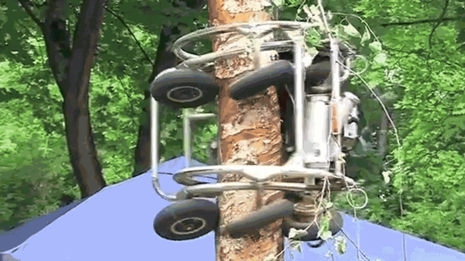 Watch This Tree Climbing Chainsaw Monster Shave This