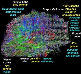 Illustration for article titled How You Inherit Genes That Make You Smarter