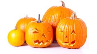 Illustration for article titled Northeast Faces Devastating Pumpkin Shortage