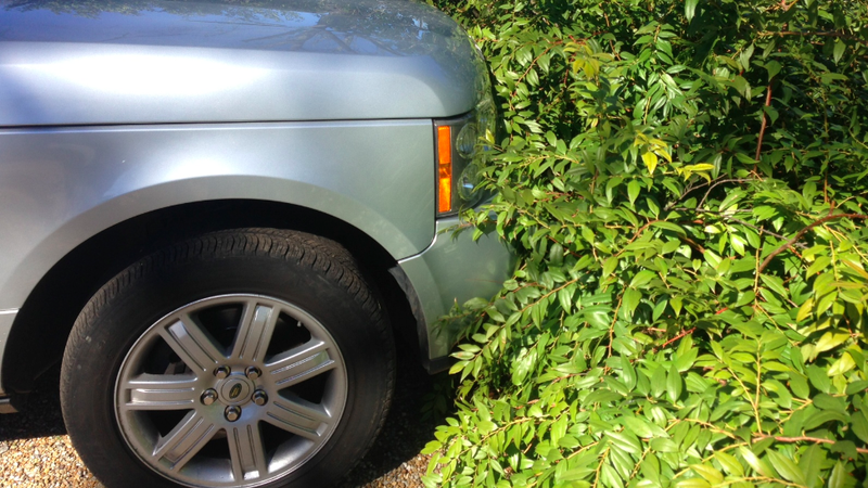 Illustration for article titled Stop Beeping, Parking Sensors: Those Are Shrubs