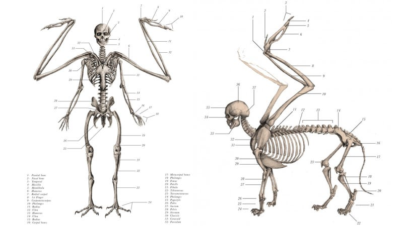 Illustration for article titled Mythological creatures are cooler when they're anatomically correct