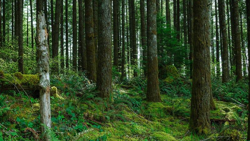 Un estudio concluye que la forma más barata de parar el cambio climático es... pagar a los propietarios de árboles