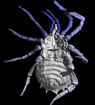 Illustration for article titled This Is How a 300 Million-Year-Old Spider Looks (Spoiler: Bloody Scary)