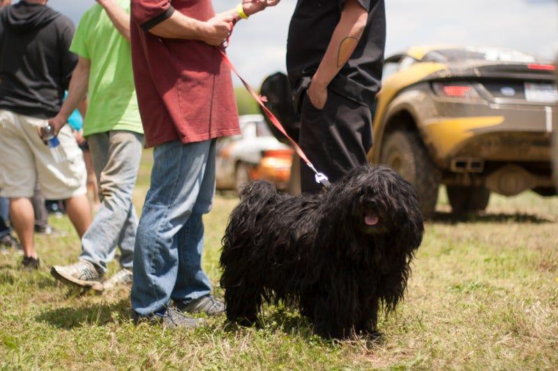 Illustration for article titled The Cutest Dog In Motorsport