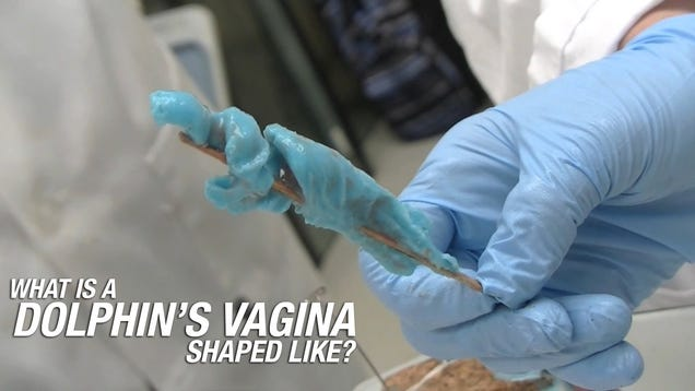This Is What A Dolphins Vagina Looks Like-8843