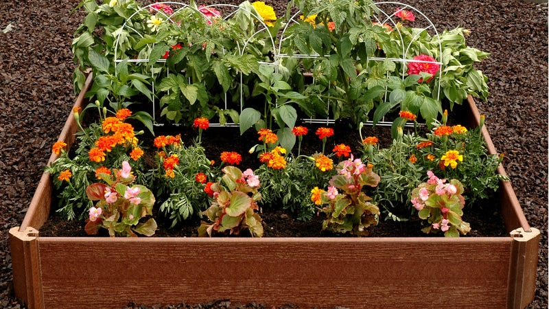 Greenland Gardener Raised Garden Kit | $20 | Walmart