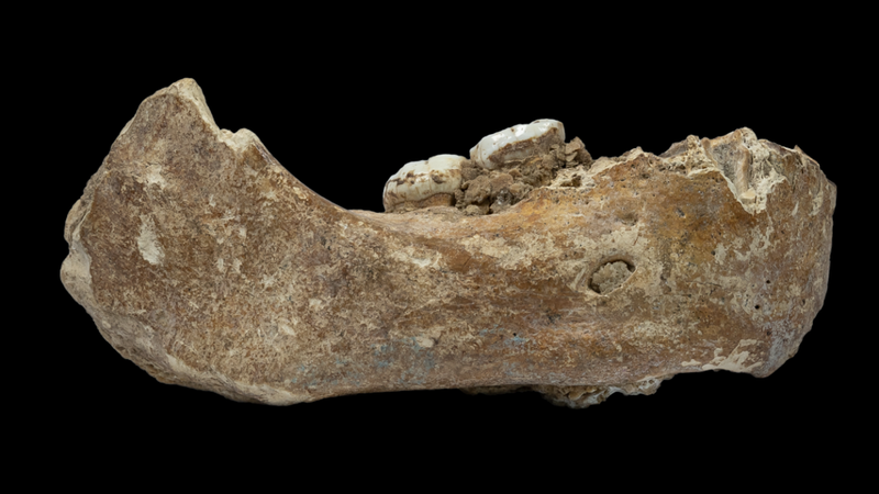 A photo of the Xiahe mandible.