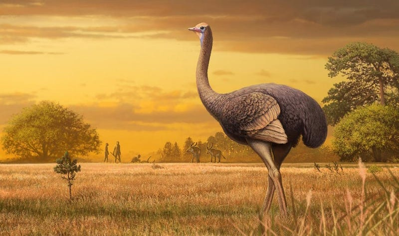 Illustration for article titled Encuentran los restos fósiles de un ave prehistórica tan grande que el avestruz parece un canario a su lado