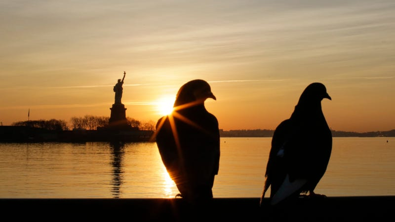 These birds like liberty. Therefore it follows that if you do not like them, you do not like liberty.