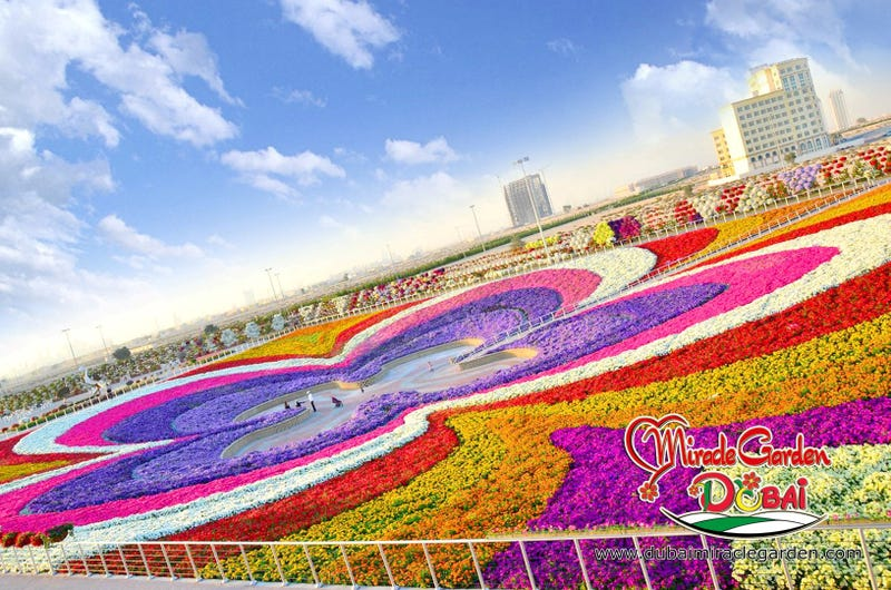 Illustration for article titled Of Course Dubai Has The Largest Flower Garden In The World