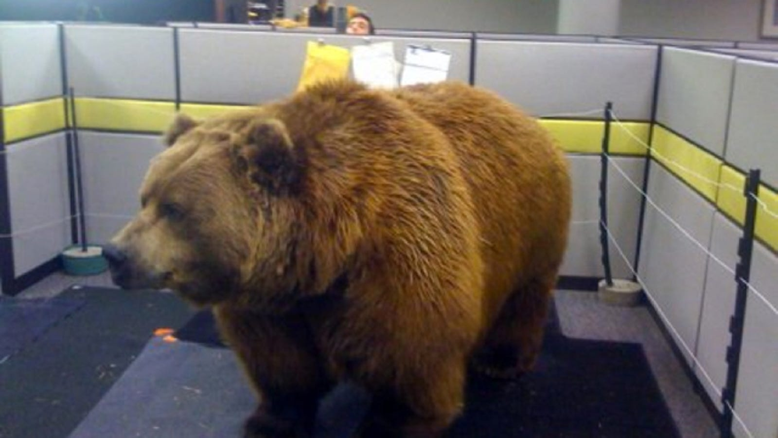 this is proof that office cubicle pranks have gone way too far