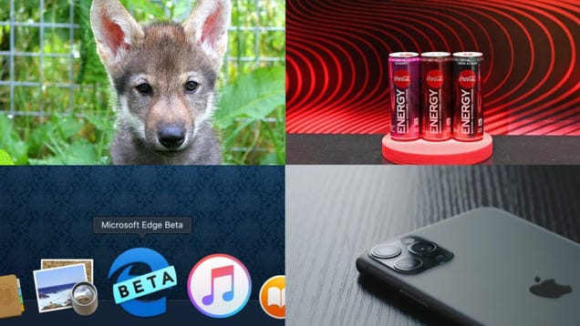 Wolf Puppies, Coke Energy and the Last Vestige of Internet Explorer: Best Gizmodo Stories of the Week