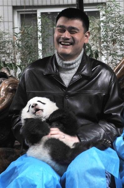 Illustration for article titled Yao, Panda. Panda, Yao.
